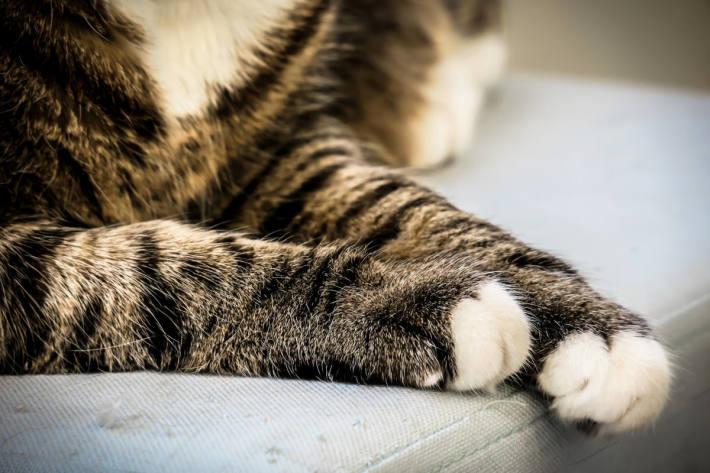 Katzenpfoten Symbolbild