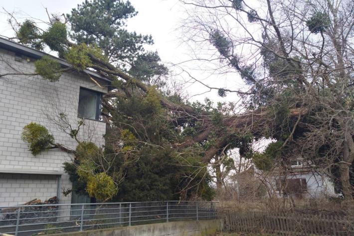 In Vaduz traf ein umgestürzter Baum ein Haus.
