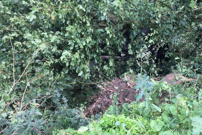 Person im Auto unter Baum eingeklemmt in Dinslaken