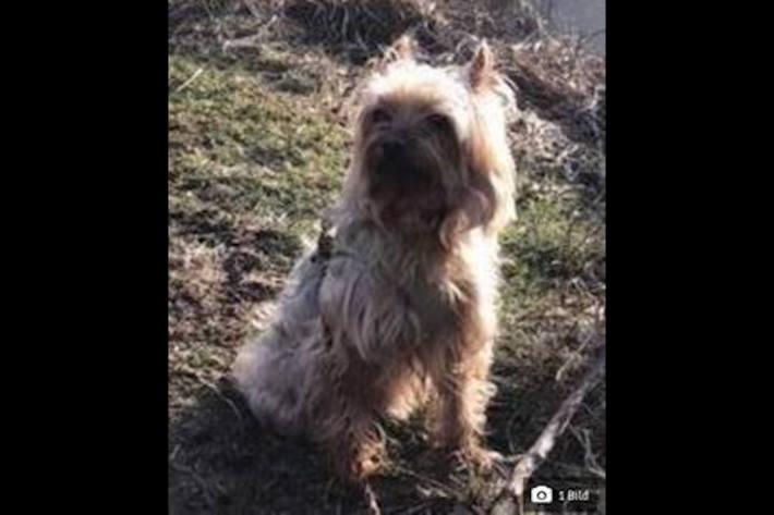 """Autobahn wegen """"Lilli"""" gesperrt – Yorkshire-Terrier schnappt zum Dank nach Autobahnpolizist"""