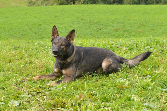 Polizeihund Rusty