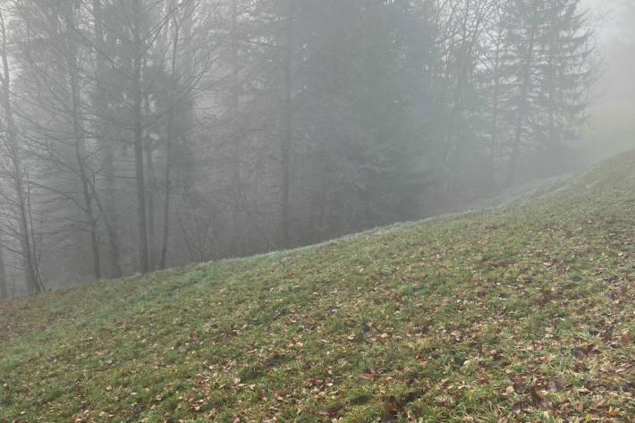 Die Leiche wurde im Wald bei Kirchberg gefunden.