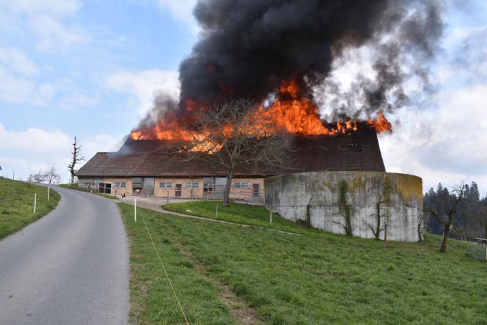 Alle Tiere konnten beim Brand in Ruswil LU vor den Flammen gerettet werden.