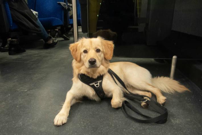 Damit Hunde treue Begleiter im Alltag sind, braucht es einiges an Training.
