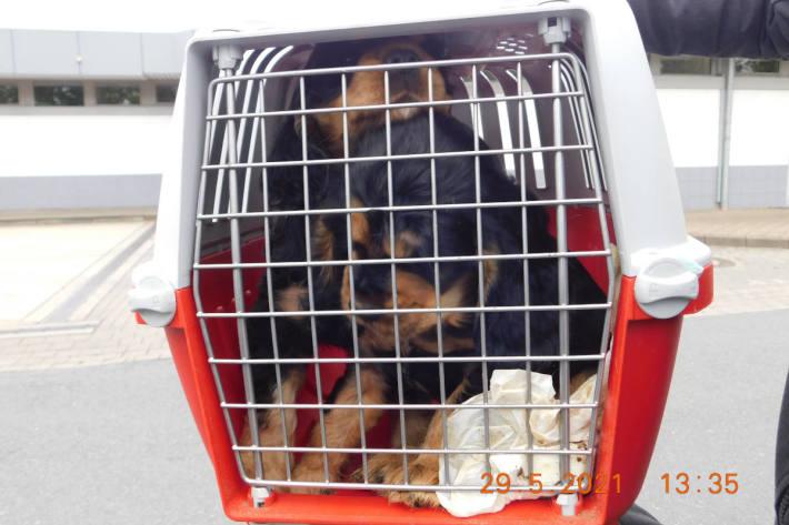 Polizei befreit Hundewelpen und ein Kätzchen