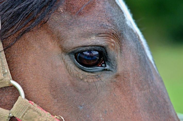 Zwei Pferde sterben nach Zugkollision (Symbolbild)