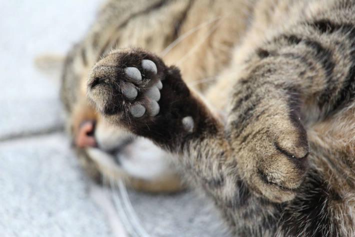 Täter sollen eine Katze in Schalksmühle beschossen haben (Symbolbild)