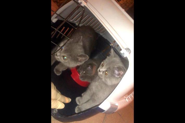 Gerettet Kätzchen