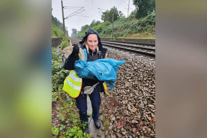 Bundespolizei rettet Schwanenjunge nach tödlichem Bahnunfall