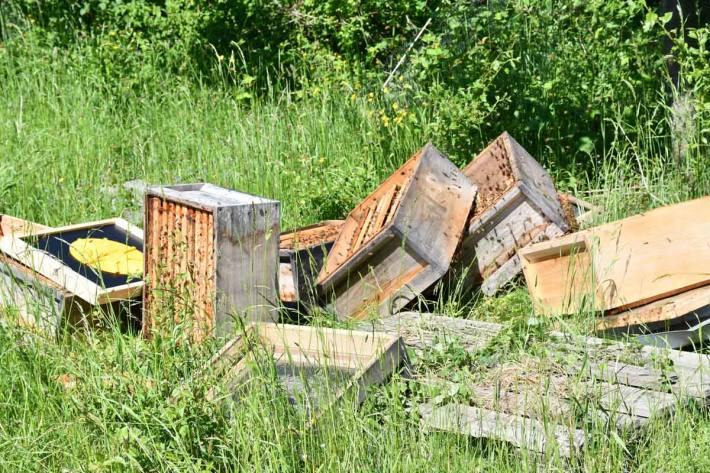 Der Bienenstock wurde in Langenfeld vollständig zerstört