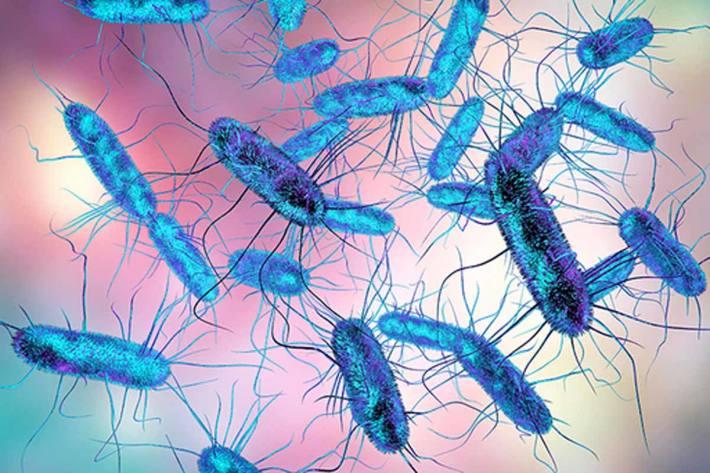 Darmflora Grund für asymptomatischen Krankheitsverlauf