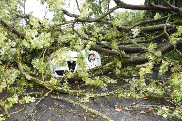 In Staad SG ist gestern ein Baum auf ein Auto gestürzt.