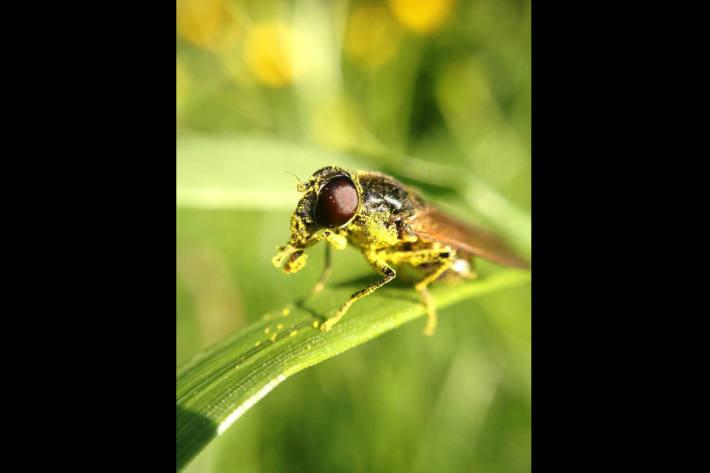 Insekt auf Wassersuche