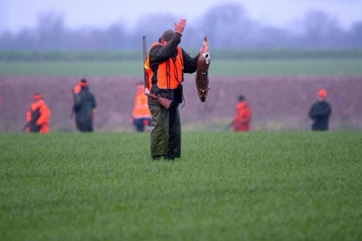 Jäger töten jährlich bundesweit fast 200'000 Hasen.