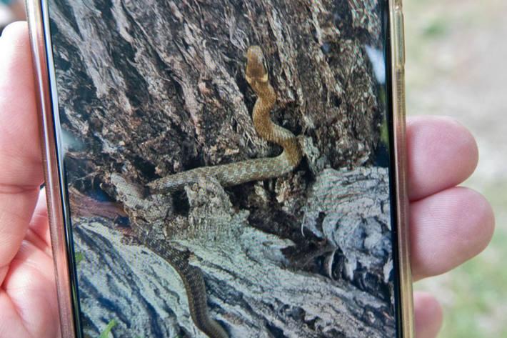 Eine Kindergarten Pädagogin wurde im Gartenbereich der Anlage von einer Schlange gebissen, als sie versuchte das Tier mit einem Stock von den ebenfalls anwesenden spielenden Kindern wegzuschieben