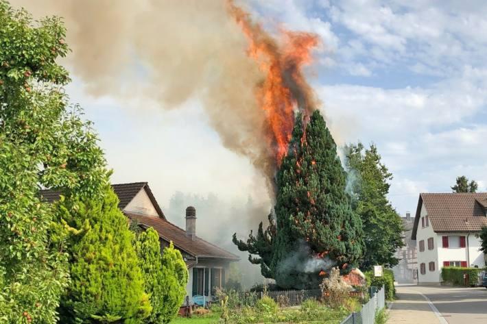 Bei Abflammarbeiten ist gestern in Altnau TG ein Baum in Brand geraten.