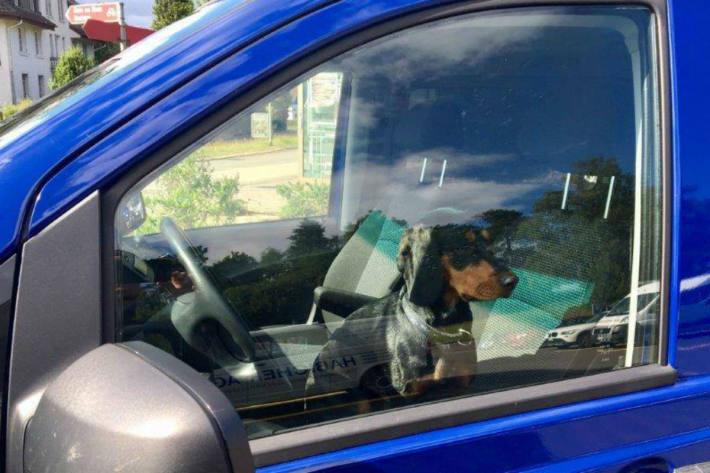 Hund wartet in Offenbach Wochen im geschlossen PKW auf seine Besitzerin (Symbolbild)