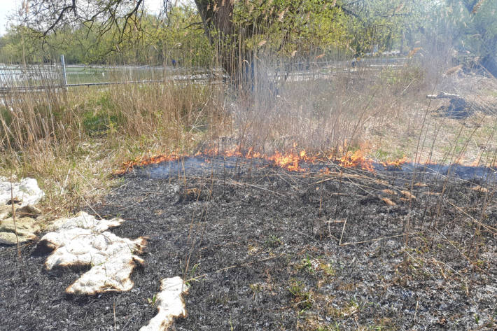 Durch den Brand wurden zirka 400 Quadratmeter Schilf in Scherzingen zerstört