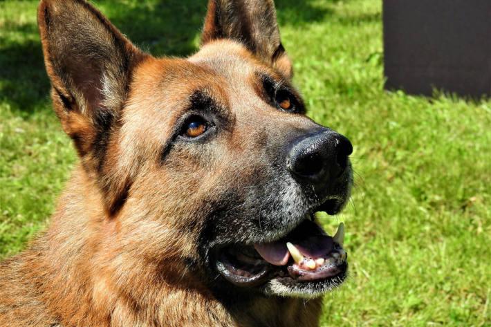 Diensthund Jack vom Münchner Zoll