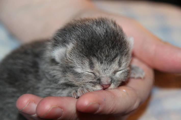 Symbolbild - Katzenbaby