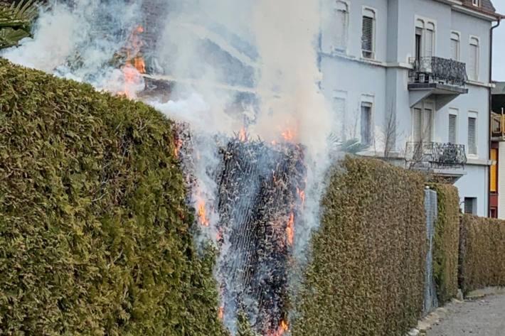 In Rorschach SG brannte gestern eine Thuja Hecke.