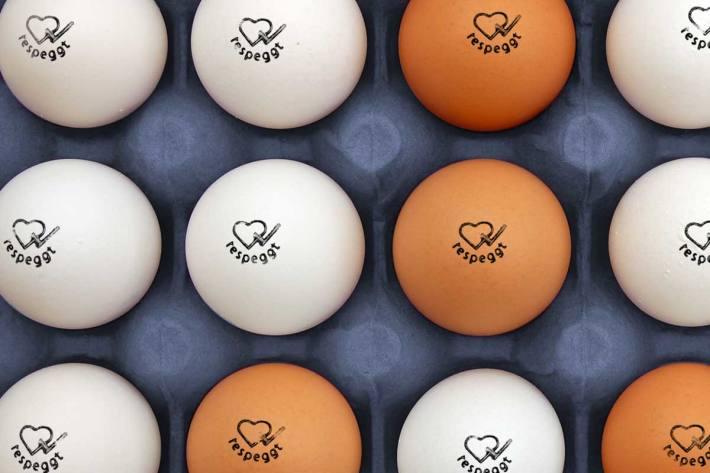 Jährlich werden in der Schweiz rund drei Millionen männliche Küken getötet