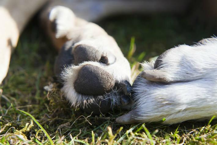 Der Hund konnte nicht mehr gerettet werden und verendete in Klagenfurt (Symbolbild)