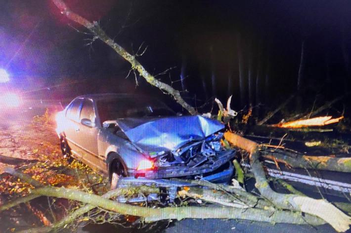 Baum fällt auf BMW bei Leizen