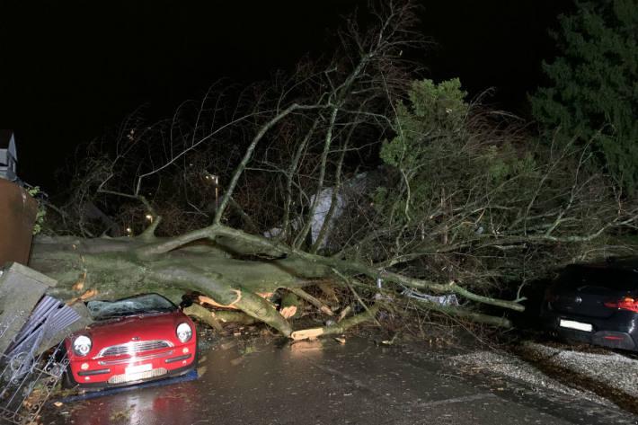 Der Baum hat vier Autos unter sich begraben.