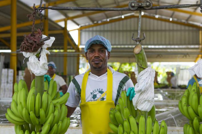 Pionierprojekte in der Dominikanischen Republik, Ghana und Honduras