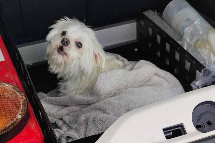 Hund und Frauchen unverletzt in Aßlar