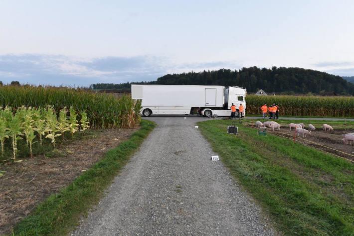 Mofalenker wird bei Kollision mit Lastwagen schwer verletzt in Flaach