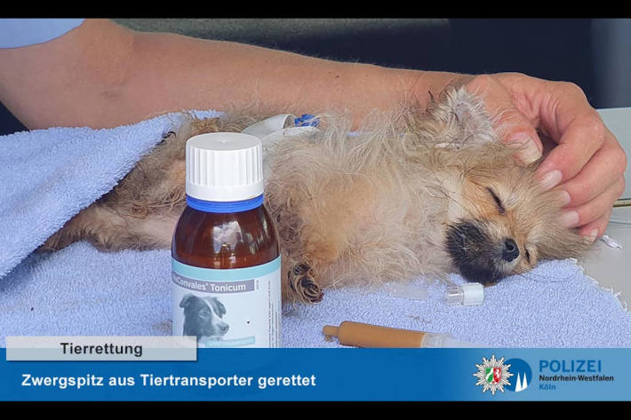 geretteter Hund