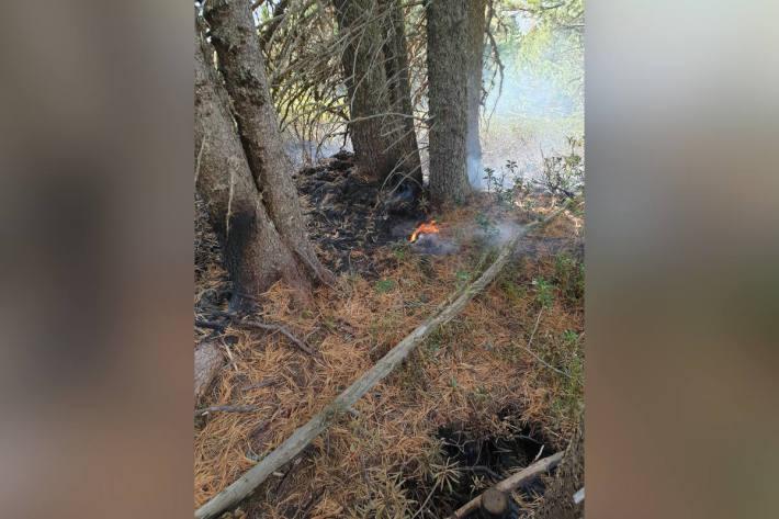 Wald durch Mottbrand beschädigt