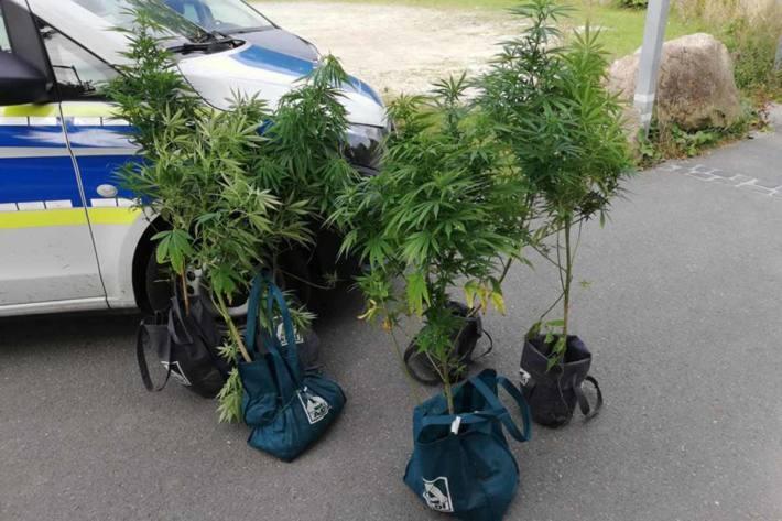 Bahntechniker waren in Bielefeld bei ihrer Arbeit auf die Cannabispflanzen gestoßen