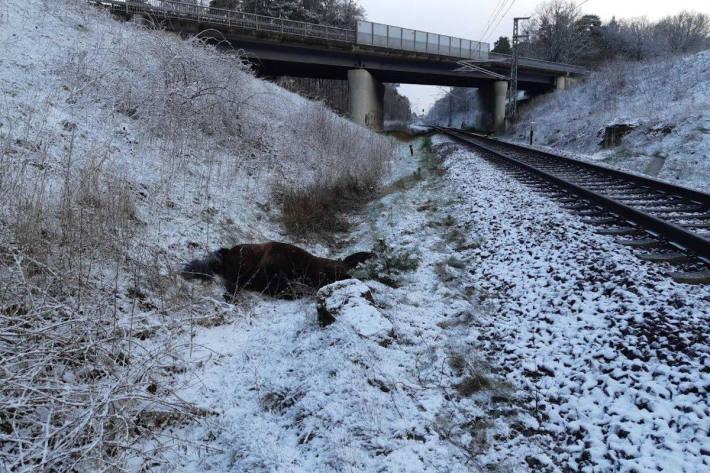 Totes Pferd neben der Bahnstrecke bei Unterstedt