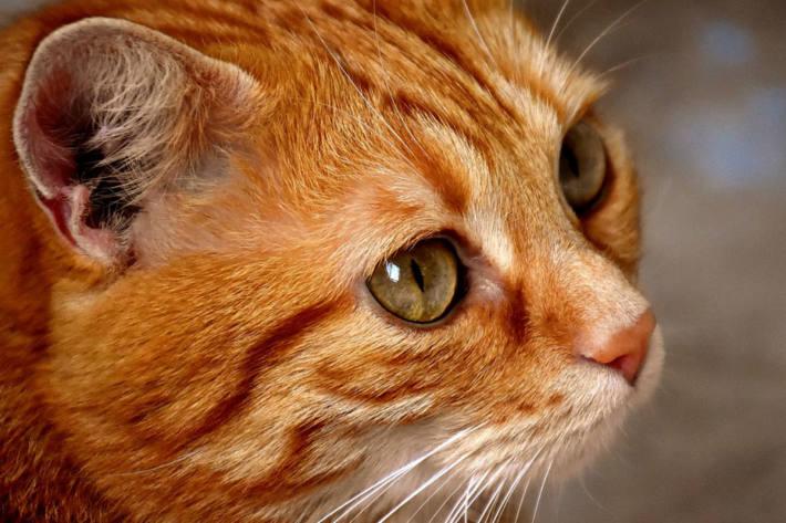 In Reifnitz/WS hat einen Katze einen Giftköder gefressen. (Symbolbild)