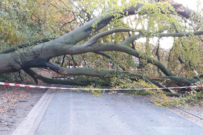 Baum über der Fahrbahn