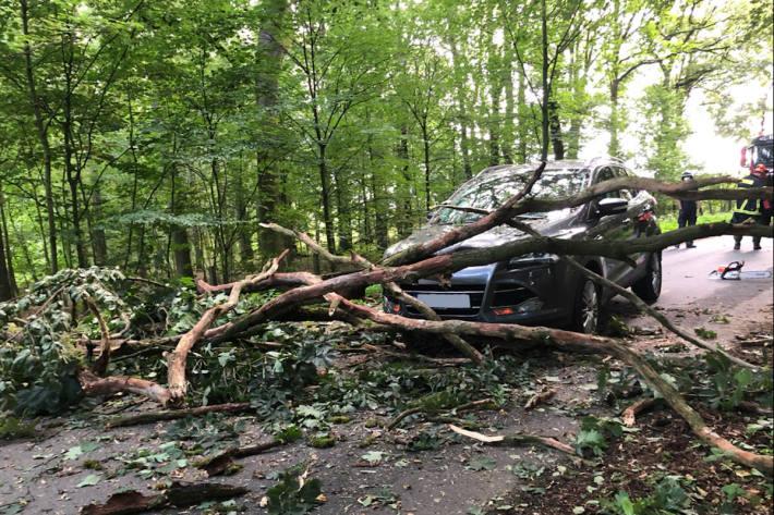 Schwere Kollision mit stürzendem Baum gerade noch verhindert