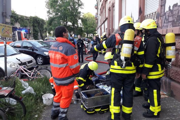 In Frankfurt konnten 9 Katzen konnten aus den Flammen gerettet werden.
