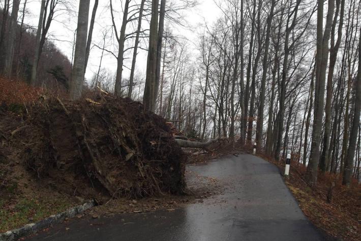 Auf der Schlossstrasse mussten diverse umgestürzte Bäume entfernt werden.