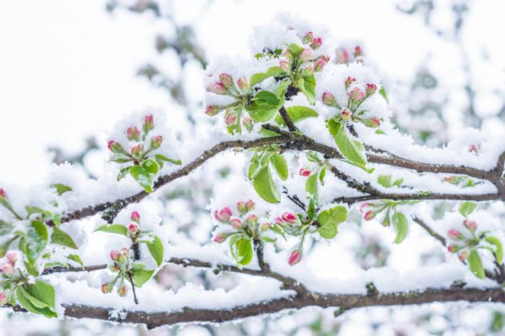 Nach der Rekordwärme in der vergangenen Woche ist der Winter mit Schnee und Frost zurückgekehrt