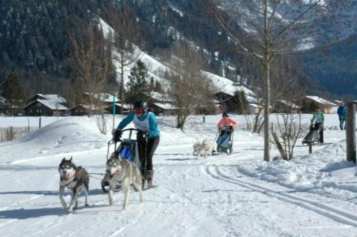 Auf vier Pfoten durch das Winterwunderland.