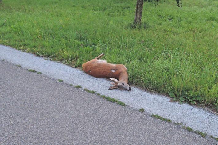 Vorsicht Tiere auf der Strasse im Kanton Thurgau