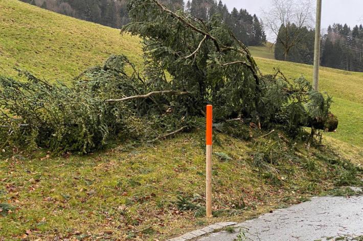 Wald ZH - 10.02.2020