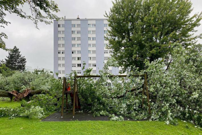 Baum stürzt auf Spielplatz und Autos in Zug