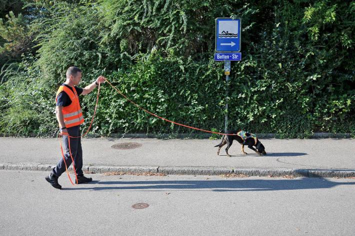 Spürhunde im Einsatz bei der Kantonspolizei Zürich