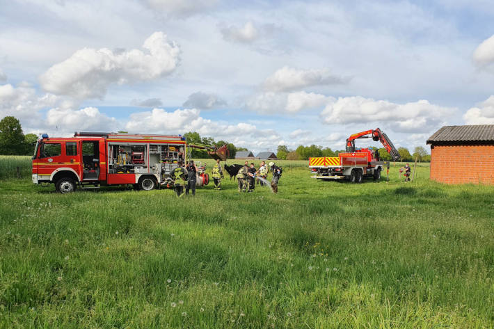 Feuerwehr rettet trächtige Kuh aus Güllekeller bei Bocholt