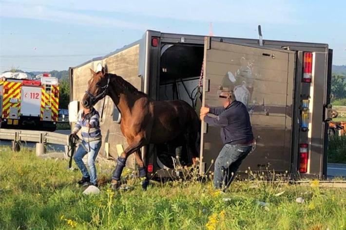 Die Pferde mussten in Münster von der Feuerwehr aus dem demolierten Wrack befreit werden