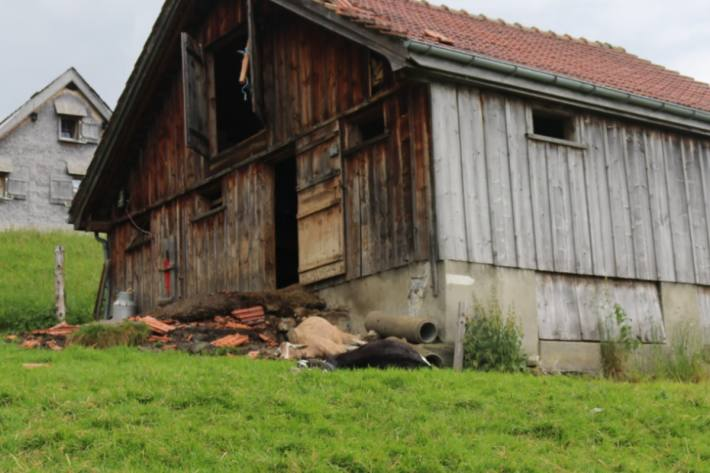 Ein Blitzeinschlag in Steinegg AI hat am Samstag drei Geissen getötet.